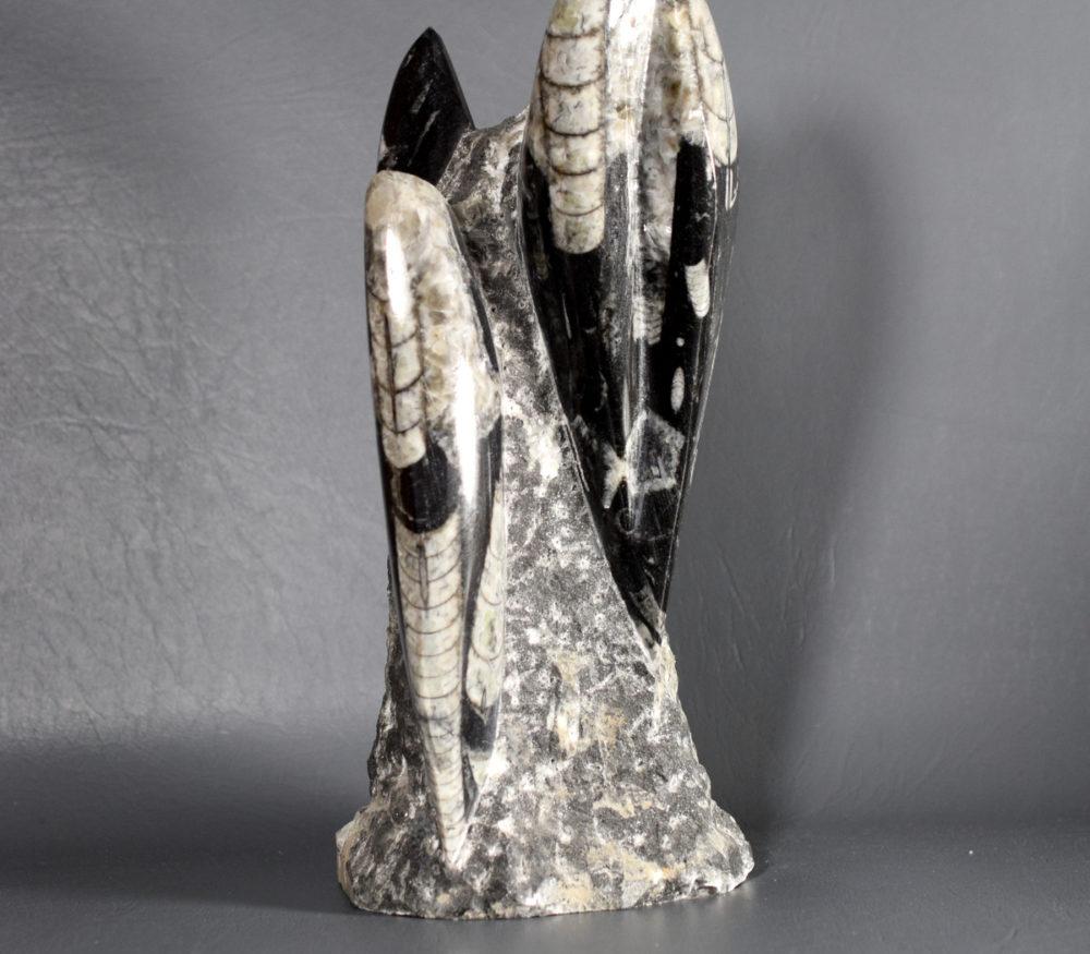 rzeźba łodzikowate Orthoceras